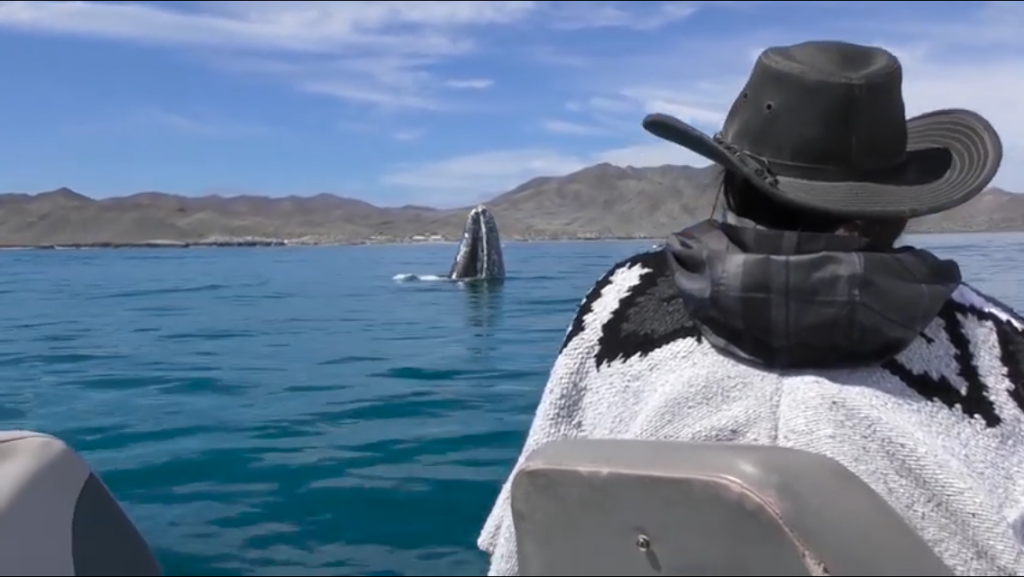 The Whales of Magdalena Bay