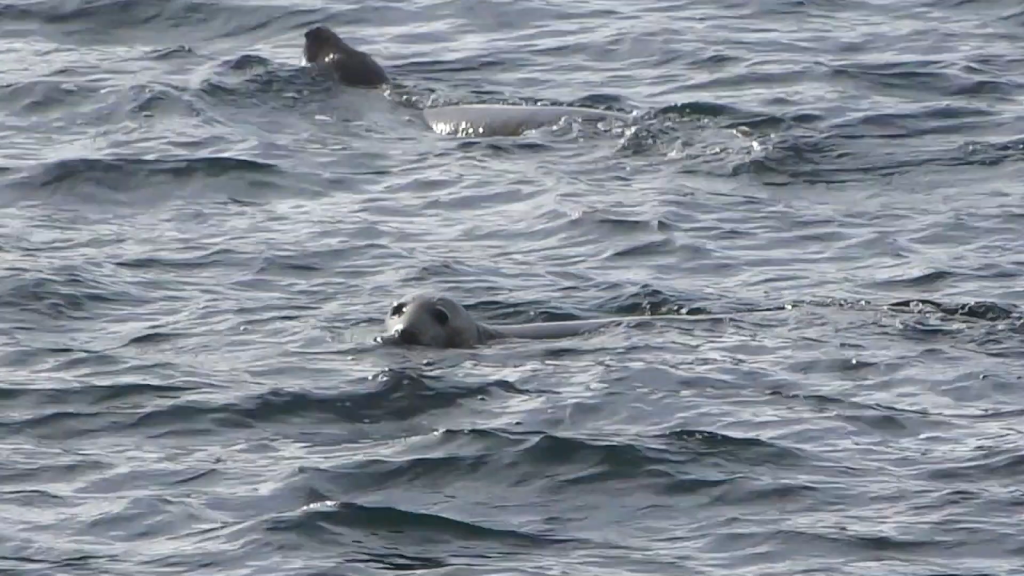 The Sound (of) Seals